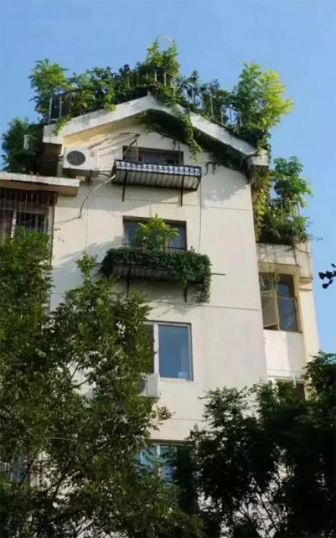 Khu vườn xanh ngát trên mái chung cư khiến hàng xóm nổi giận