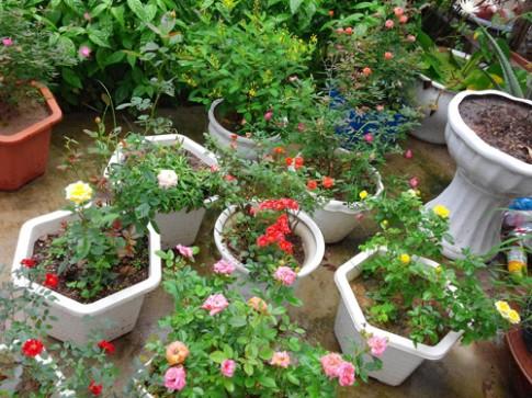 Ngợp trời vườn hồng ngoại trong phố trên đất Cảng