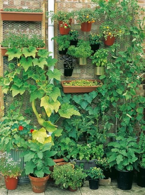 10 kiểu vườn rau khác lạ
