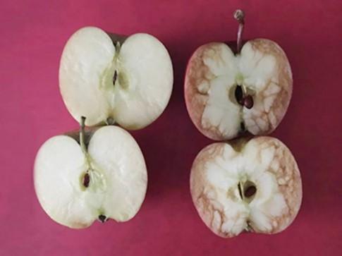 Bức ảnh 2 quả táo và bài học đắt giá mọi cha mẹ Việt phải dạy con