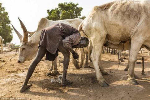 Cuộc sống của bộ tộc dùng nước tiểu của bò để tắm