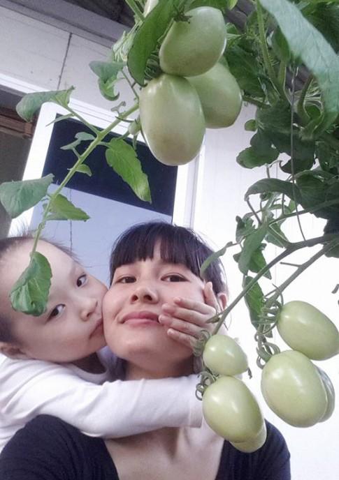Học mẹ trẻ Hà Nội luyện bí kíp trồng cà chua trĩu cây