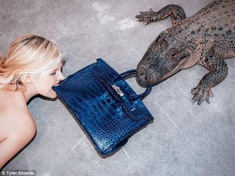 Người mẫu và cá sấu cắn nát túi Hermes 2 tỷ đồng