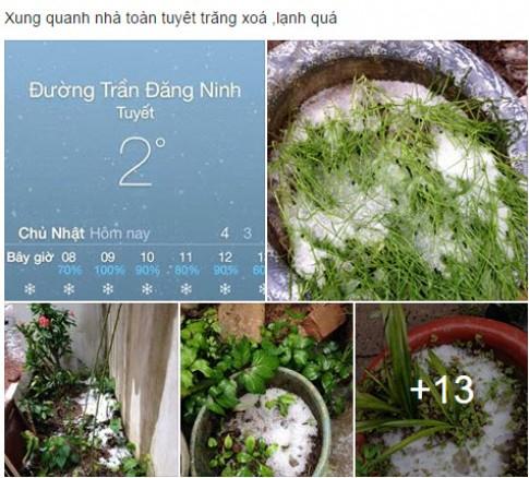3 bước cứu cây hoa, rau sạch sống sót qua ngày băng tuyết