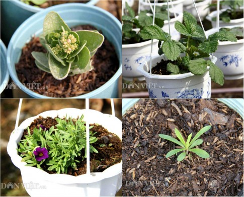 Nhiều giống hoa mới lạ hứa hẹn đắt hàng dịp Tết