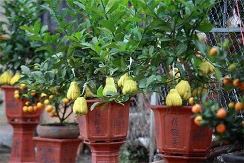 """Phật thủ 2 triệu đồng/cây xuống phố """"đón"""" Tết"""