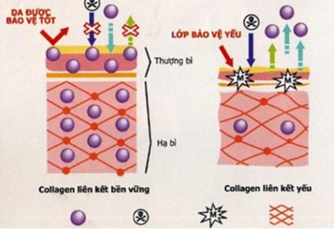 Dưỡng da mùa thu mịn màng với mỹ phẩm chứa Hyaluronic axit
