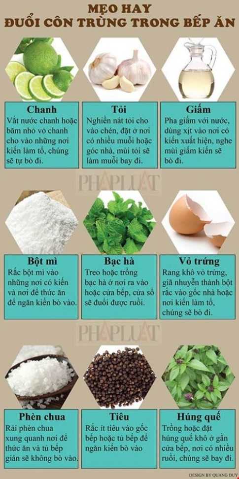 Infographic Meo hay duoi con trung trong bep an