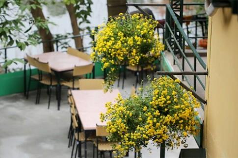 Những chậu hoa nở đẹp cả tháng Tết