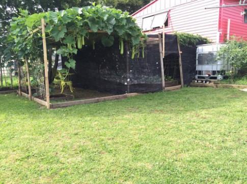 Vườn cây đủ loại rau của gia đình Việt ở New Zealand