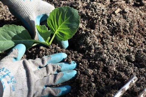 10 lỗi phổ biến khi trồng rau thơm và thảo mộc tại nhà
