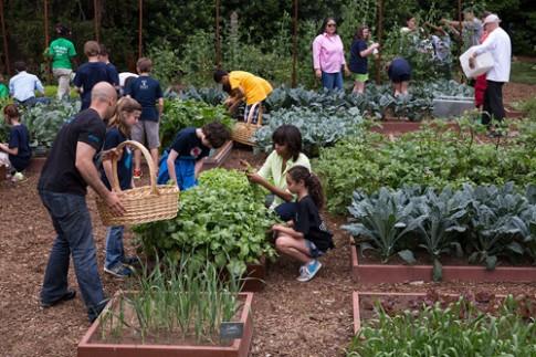 Bà Obama cùng các em nhỏ chăm sóc khu vườn rau