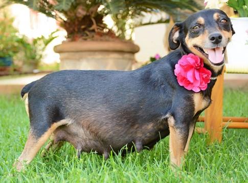 Bộ ảnh nàng chó mang bầu Hot nhất mạng xã hội