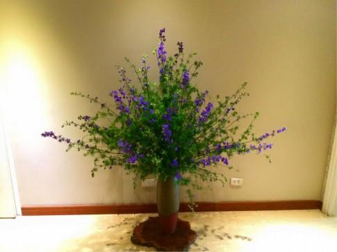 Cắm hoa violet tươi lâu đến 7 ngày