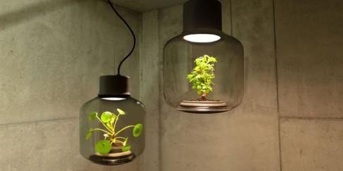 Đèn cây cảnh không cần nắng, không cần tưới