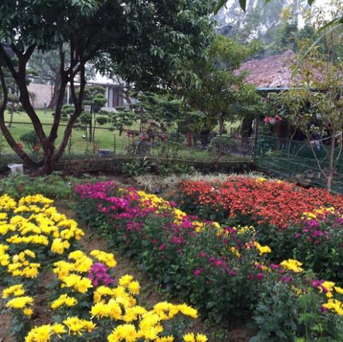 Đột nhập vườn xuân trăm cỏ cây của sao Việt