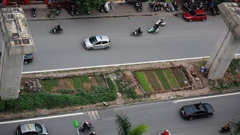 HN: Vườn rau sạch dưới chân đường sắt trên cao