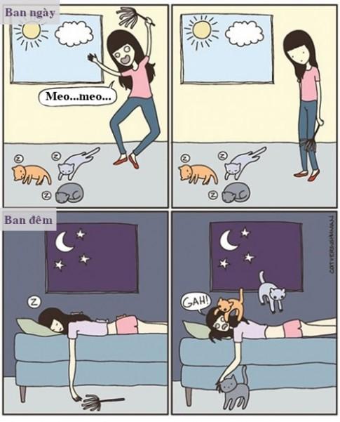 Những nỗi lòng khó nói chỉ chị em nuôi mèo mới hiểu