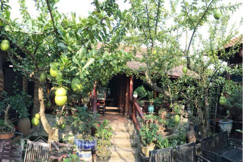 Quảng Ngãi: Độc, lạ cây bòng tây có trái hình hồ lô