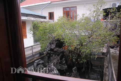 Sự thật về kho báu dưới gốc cây sanh giá 14 tỷ ở Huế