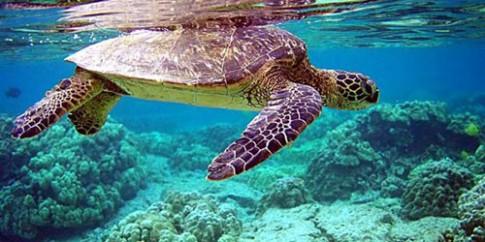 Côn Đảo: Mùa rùa con rộn ràng về với biển