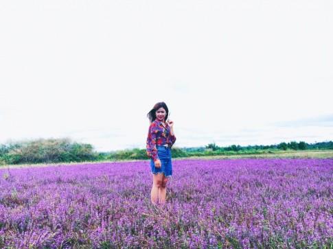 Cánh đồng hoa tím biếc đẹp ngỡ trời Âu ở Đắk Lắk