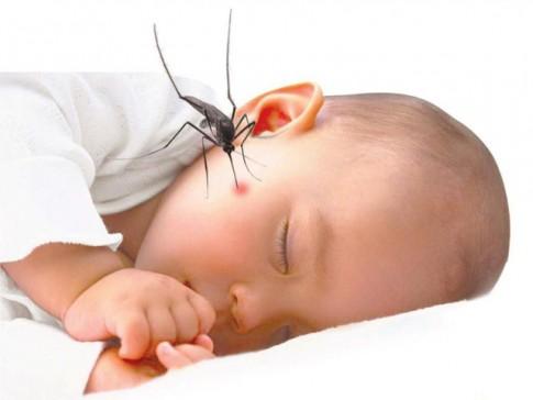 Cảnh báo nguy cơ tử vong khi trẻ bị côn trùng đốt mùa hè