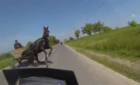 Cô gái đi môtô đứng tim vì ngựa