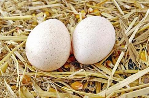 Lấy 1 quả trứng 1 quả chanh chưa đến 5 ngàn đồng mà dưỡng da căng mướt như em bé