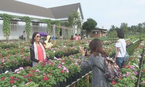 Sa Đéc, Nghệ An kín khách ngắm hoa đầu năm