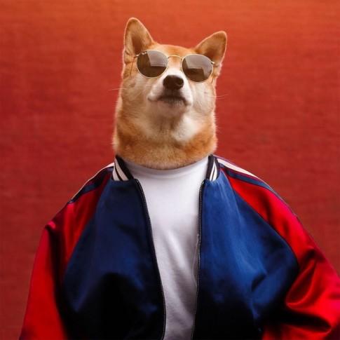 Bodhi - Chú chó mặc đồ menswear đẹp hơn cả người, lại còn kiếm được 15.000$ mỗi tháng
