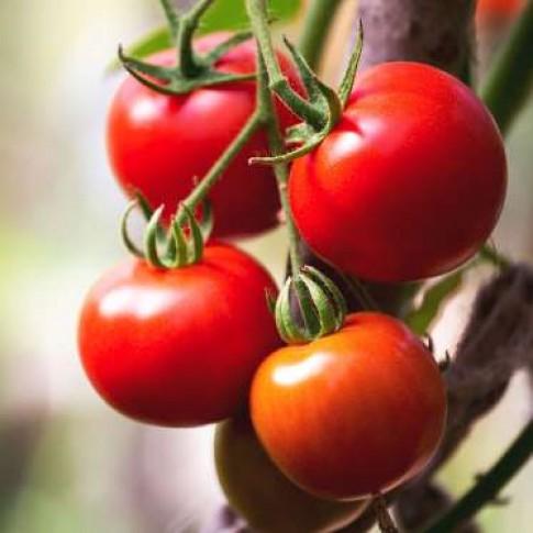 Những thực phẩm giảm cân mùa hè tốt nhất cho chị em