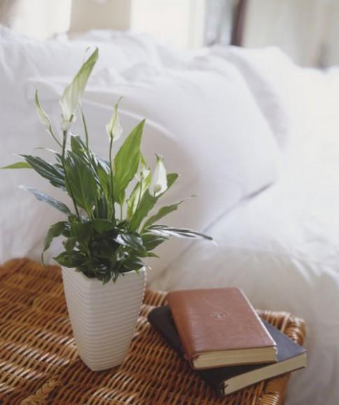 8 loại cây trồng mang lại phong thủy tốt cho nhà chung cư