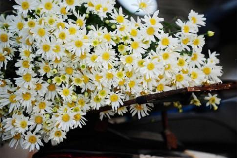 Bí quyết nhuộm màu cho hoa cúc trắng cực nhanh