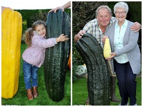 Choáng váng cụ ông 67 tuổi trồng rau củ quả to hơn cả cháu