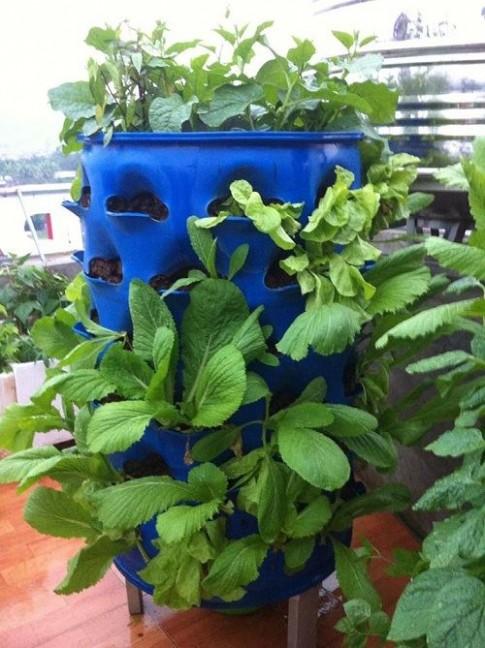 Ghé thăm vườn rau tốt um của bà mẹ trẻ ở Lào Cai