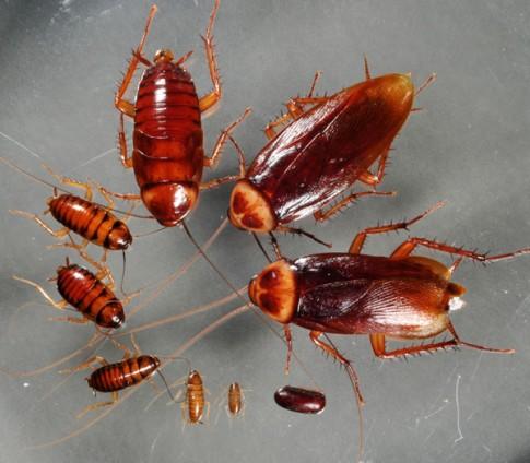 Những loại côn trùng có hại nào đang ở trong nhà bạn?