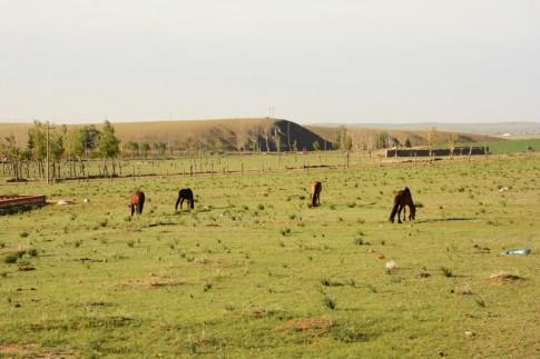 Phi ngựa trên thảo nguyên, cưỡi lạc đà ở sa mạc Nội Mông