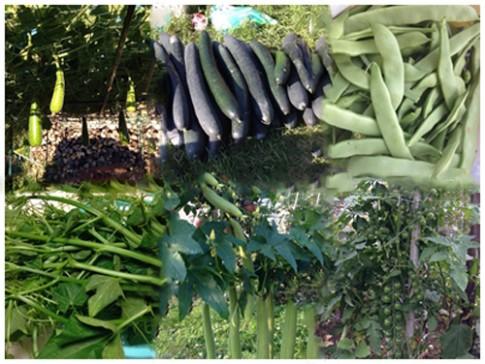 Thăm vườn rau quả trĩu trịt của mẹ Việt trên đất Slovakia