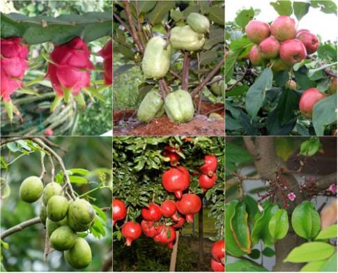 Top 9 loại cây ăn quả dễ trồng ở sân vườn nhà phố