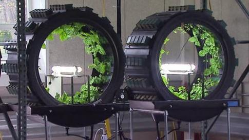 """Trang trại triệu đô: Trồng rau trong những """"bánh xe"""""""