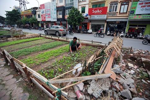 Tự trồng rau hộp xốp vẫn có nguy cơ nhiễm độc