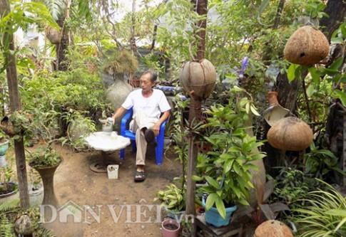 """Vườn """"thượng uyển"""" kiểng treo sinh thái từ trái dừa khô"""