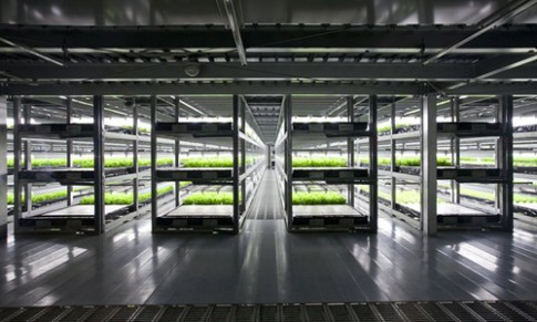 """""""Vườn trong nhà"""" thẳng đứng sản xuất 21.000 cây rau sạch mỗi ngày"""
