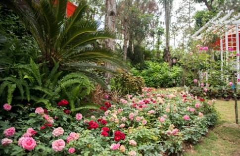 Vương quốc hoa hồng quý đầu tiên tại Việt Nam sắp ra mắt