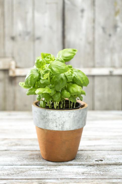 """8 loại cây trồng trong nhà khiến """"mệt mỏi chỉ còn là chuyện nhỏ"""""""