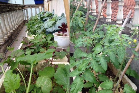 Cô giáo về hưu tiết kiệm tiền triệu mỗi tháng nhờ vườn rau sân thượng