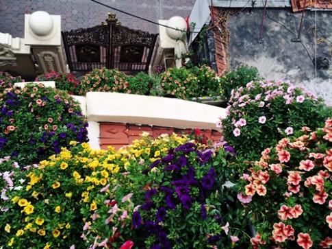 Hoa triệu chuông nở kín tường, đây chính là ngôi nhà 'màu mè' nhất Quảng Ninh