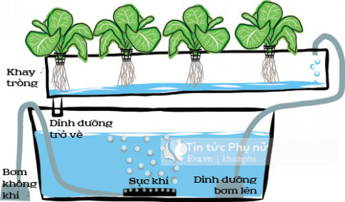 Lý do khiến Thu Phương mạnh tay đầu tư giàn rau khủng theo phương pháp thủy canh