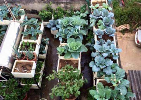 Mẹ 7X khiến chồng thêm nể phục nhờ vườn rau sân thượng